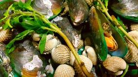 Mariscos de Shell Imagen de archivo libre de regalías