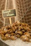 Mariscos dulces de la almeja en el hielo fotos de archivo libres de regalías
