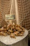 Mariscos dulces de la almeja en el hielo fotografía de archivo libre de regalías