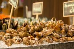 Mariscos dulces de la almeja en el hielo foto de archivo
