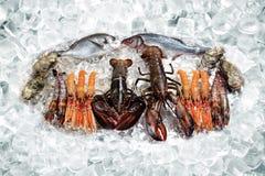 Mariscos en el hielo Foto de archivo libre de regalías