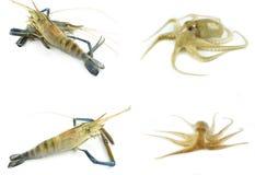 Mariscos frescos - camarón y calamar fotografía de archivo libre de regalías