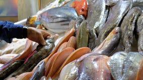 Mariscos frescos, diverso pescado de mar en el hielo vendido en escaparate en el mercado callejero almacen de metraje de vídeo