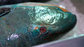 Mariscos frescos, diverso pescado de mar en el hielo vendido en escaparate en el mercado callejero almacen de video