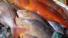 Mariscos frescos, diverso pescado de mar en el hielo vendido en escaparate en el mercado callejero metrajes