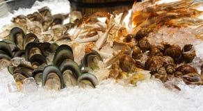 Mariscos mezclados  en el hielo Fotografía de archivo libre de regalías