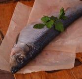 Mariscos salados enteros de los arenques de los pescados Foto de archivo libre de regalías