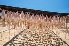 Mariscos, secados por el sol Imagen de archivo