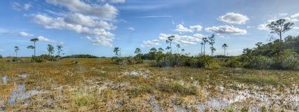 Marismas cênicos de Florida da paisagem fotos de stock