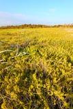 Marismas costeros del paisaje de la pradera Fotografía de archivo libre de regalías