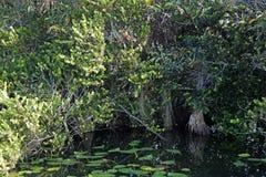 Marismas, Florida, EUA Fotografia de Stock Royalty Free