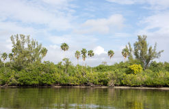 Marismas, Florida, EUA Imagem de Stock
