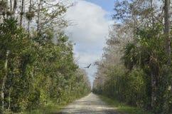 Marismas Florida EUA do voo do pássaro Imagem de Stock Royalty Free
