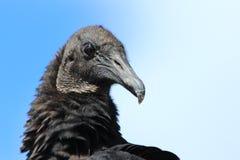 Marismas N P - O pássaro preto Imagens de Stock