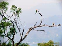 Maritacas en Quinta da Boa Vista Fotografía de archivo libre de regalías