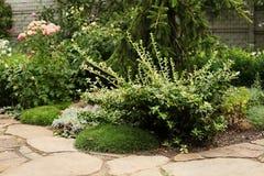 Maritima и бересклет Armeria растя около сделанного пути сада стоковые изображения rf