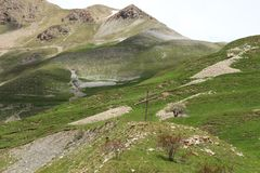 Maritima fjällängar i söderna av Frankrike Fotografering för Bildbyråer