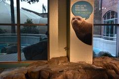 Maritime Aquarium in Norwalk, Connecticut. USA Stock Images