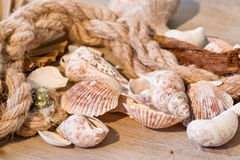 Maritime background with seashells and old rope Royalty Free Stock Image