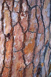 Maritime Pine Bark. Detail of Maritime Pine Bark - Wooden texture or background Royalty Free Stock Images