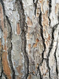 Maritime pine bark Royalty Free Stock Photography