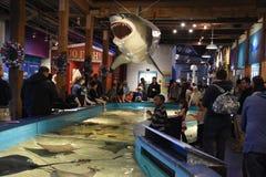 Maritimt akvarium i Norwalk, Connecticut royaltyfri foto