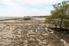 Maritimt landskap på lågvattenvatten arkivbilder
