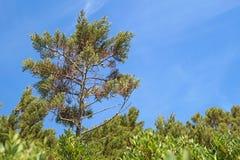 Maritimt sörja på blå himmel Detalj med stam- och gräsplanvisare fotografering för bildbyråer