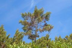 Maritimt sörja på blå himmel Detalj med stam- och gräsplanvisare arkivbild