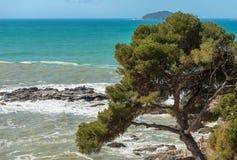 Maritimt sörja trädet och havet - Liguria Italien arkivbild