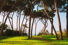 Maritimt sörja trädgruppen Baratti Tuscany arkivbilder