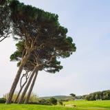 Maritimt sörja trädgruppen Baratti Tuscany royaltyfri foto