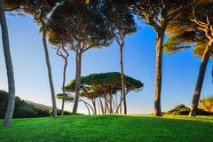 Maritimt sörja treegruppen nära havet och sätta på land Baratti Tuscany royaltyfri foto