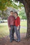 Marito e moglie sotto un albero immagini stock