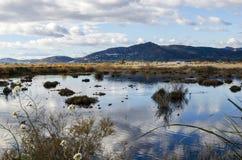 Marjal del莫罗,在萨贡托,巴伦西亚附近的沼泽地 图库摄影