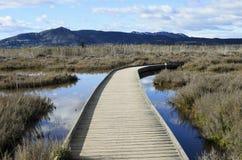 Marjal del莫罗,在萨贡托,巴伦西亚附近的沼泽地 免版税库存照片