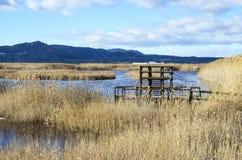 Marjal del莫罗,在萨贡托,巴伦西亚附近的沼泽地 免版税图库摄影