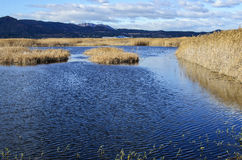 Marjal Del Moro, bagna blisko Sagunto, Walencja Fotografia Stock