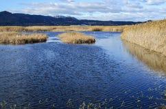 Marjal del Moro, pantanal perto de Sagunto, Valência Fotografia de Stock