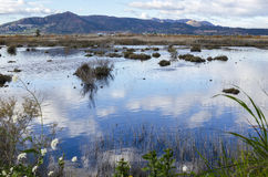 Marjal Del Moro, Sumpfgebiet nahe Sagunt, Valencia Lizenzfreies Stockfoto