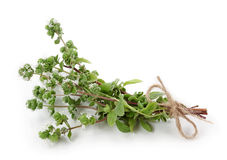 Marjoram Royalty Free Stock Photo