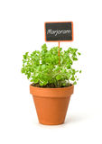 Marjoram in a clay pot with a label Stock Image