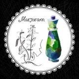 Marjoram Stock Image