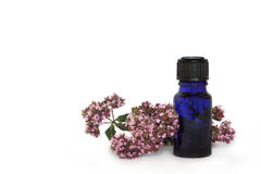Marjoram Herb Flowers Royalty Free Stock Photo