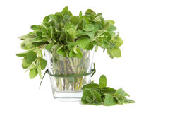 Marjoram leaves Stock Photos
