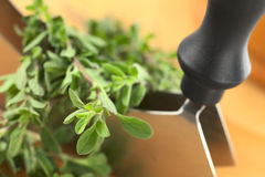 Marjoram and Mezzaluna Royalty Free Stock Image