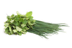 Marjoram and onion Royalty Free Stock Image