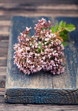 Marjoram Origanum vulgare herb Royalty Free Stock Photo