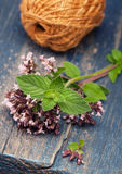 Marjoram Origanum vulgare and Mint Stock Photography