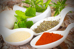 Marjoram, paprika, garlic salt Royalty Free Stock Photography